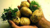 cartofi verzi la coaja